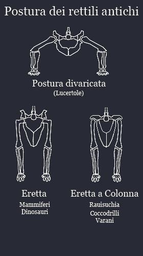 I rettili nel triassico italiano digilands for Quali sono i rettili